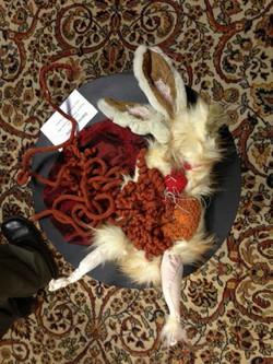 Ecorché lapin
