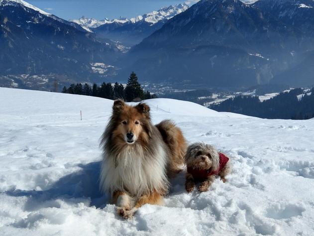 Schneehäschen