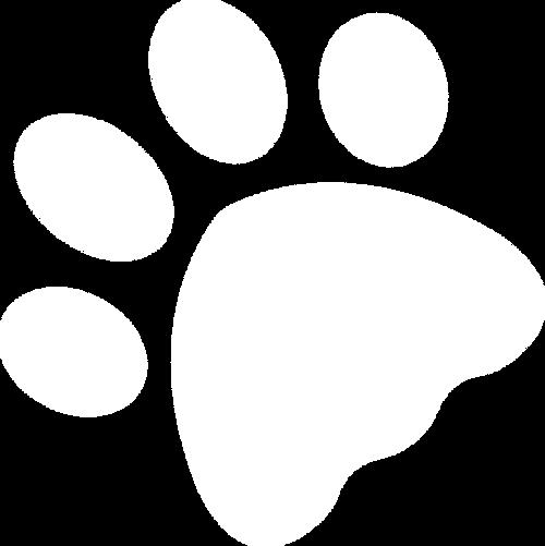 Australian, Labradoodles, Schweiz, Europa, Zucht, Welpen, Nichthaarende Hunde, Cobberdogs, Familienhunde, Langhaarhunde, Therapiehunde