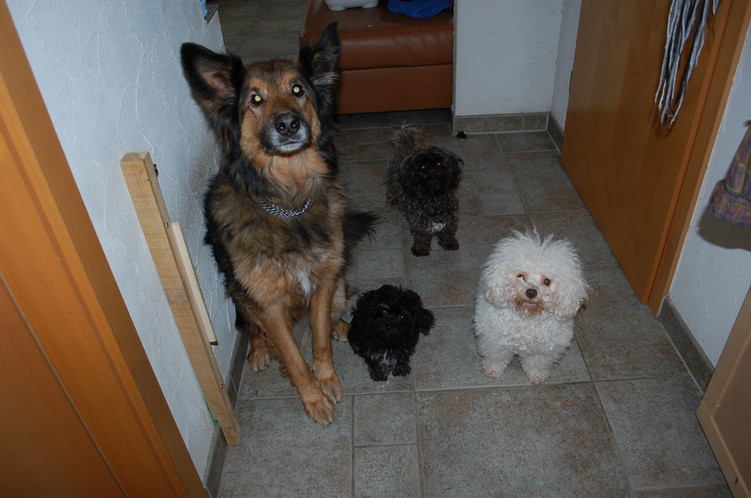 Meine Tiere