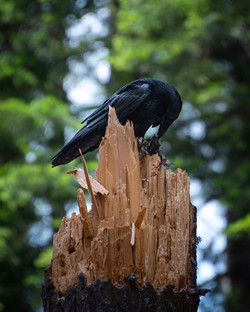 Raven 2, 2019