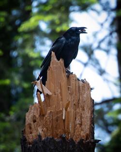 Raven 3, 2019