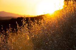 Golden Sun, 2020