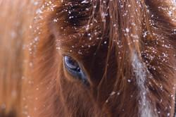 Horse Eye, 2017