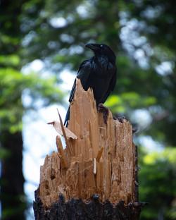 Raven 1, 2019
