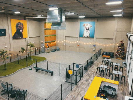 How A Dog Daycare Got On Track To Reach 7 Figures