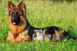 mother_always_one_who_cares_grass_tiny_dog_hd-wallpaper-1645898
