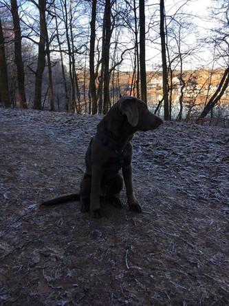 Post von Caspar | Silver Labrador von den Silberweiden