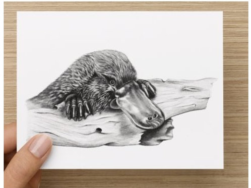 Platypus Gift Card