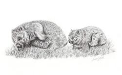 TODDLERHOOD - Common Wombats