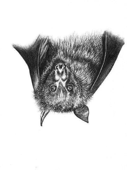 Onyx (Black flying fox) Print