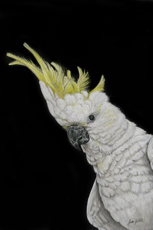 Dusty Cockatoo Print