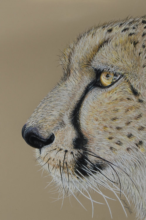 'Focus' Cheetah Print - Limited edition