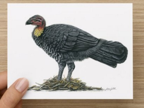Brush-turkey gift card