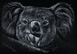 'Koala & Leaf'
