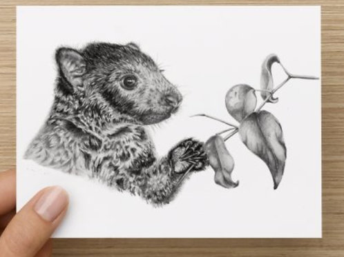 Tree Kangaroo Gift Card