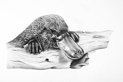 'Morning Dip' Print
