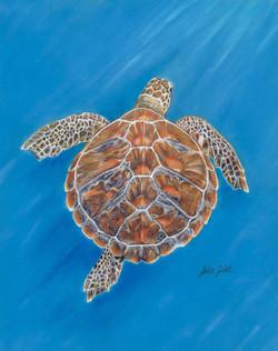 Rainbow the sea turtle.