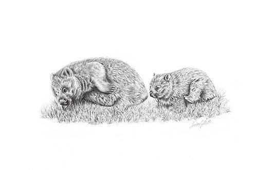 'Toddlerhood' Common Wombats