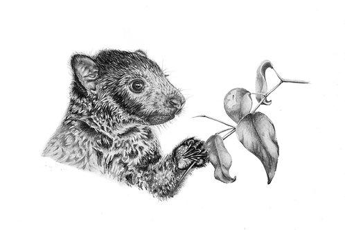 'Mabi' Tree Kangaroo Original