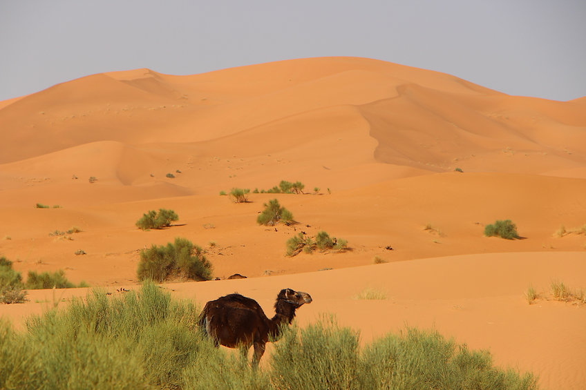 desert Mhamid Morocco Desert, Vacation packages, Morocco camel treking, south Morocco, Chegaga Dunes