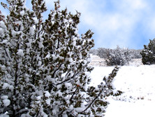 A Beautiful Winter Snow