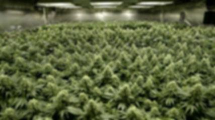 growroom.jpg