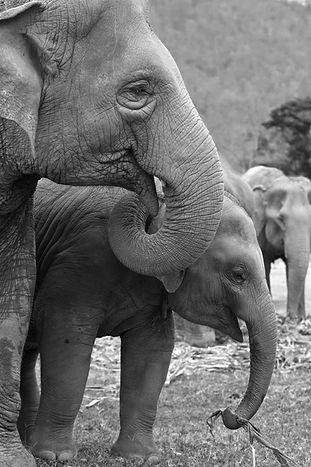 elefante_mamá_y_su_elefante_hijo.jpg
