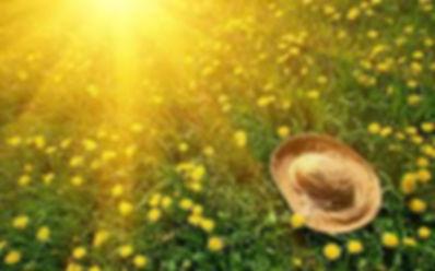 summer scene.jpg