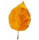 fall%20leaf%208_edited.png
