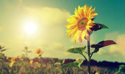 summer 2.jpg