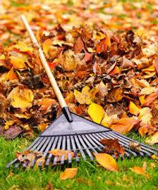 fall cleanup.jpg