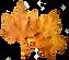 fall leaf 5.png