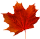 fall leaf.png