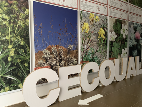 """""""¿En qué mundo vives? WAKE UP!"""" New partnership with CECOUAL for a greener planet"""