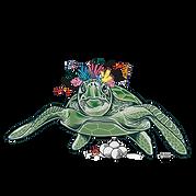 1-tortuga-cojonuda_WEB-01.png