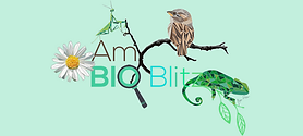 AmBioBlitz UAL
