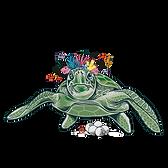 tortuga-cojonuda-web-01.png