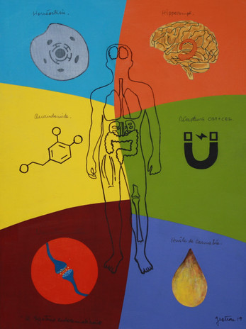 Le systeme endocannabinoides