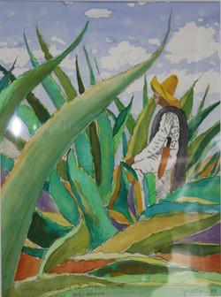 Le coupeur d'agave