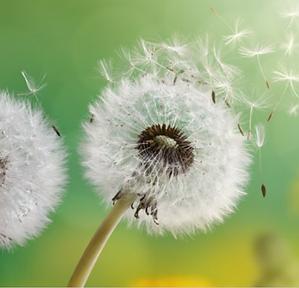 allergie-pollens-1150x1106.png