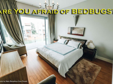 Are you afraid of bedbugs in your rental?
