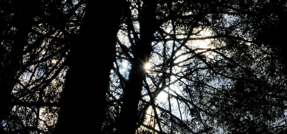 丘サイト:木漏れ日