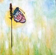 Butterfly Blush