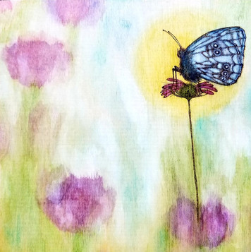 Butterfly Morning Rise