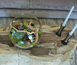 Terrarium with Succulent
