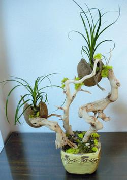 Interior Living Sculpture