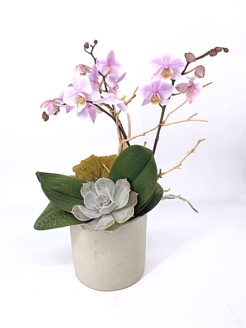 Lovely dance - Orchid& Succulent