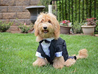 How to Successfully Include your Dog at your Wedding