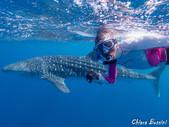 whaleshark_photos_26April2019_by_Chiara_